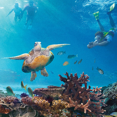 Coral Reef Region